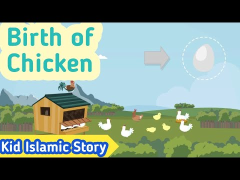 Kids Islamic Stories | Birth of Chicken | Muslim | Kaz School | English