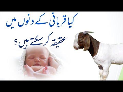 🎦  عید قربان 5   عید قربان پر قربانی اور عقیقہ ایک ساتھ کیسے کریں؟ - Urdu