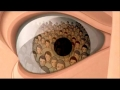 Brave New World - Film Lit and the NWO - English