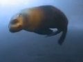 Animal Olympians: Diving - Sperm Whale - English