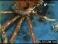 Subhanallah | Crab changing his own body | All Languages