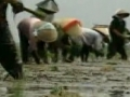 UN World Bank and IMF force many countries to sell their land - English
