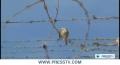 [17 Mar 2013] US must end Gitmo prison horrors: Franklin Lamb - English