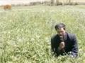 [21 Mar 2013] Natural weeds and Cure - قدرتی جڑی بوٹیاں اورعلاج - Urdu