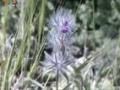 [23 Mar 2013] Natural weeds and Cure - قدرتی جڑی بوٹیاں اورعلاج - Urdu