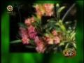Birthday of Ali Akbar AS - Persian