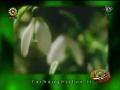 Celebration - Wiladat Imam Mehdi AS - persian