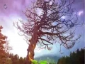 [Short Clip] خدا کی نشانیوں میں غور کرنا۔ حجۃ الاسلام سید حیدر نقوی - Urdu